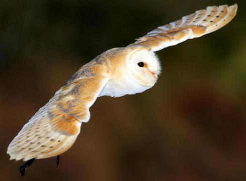 猫头鹰启发科学家研发出消音涂层 风力发电机可以安静地工作了