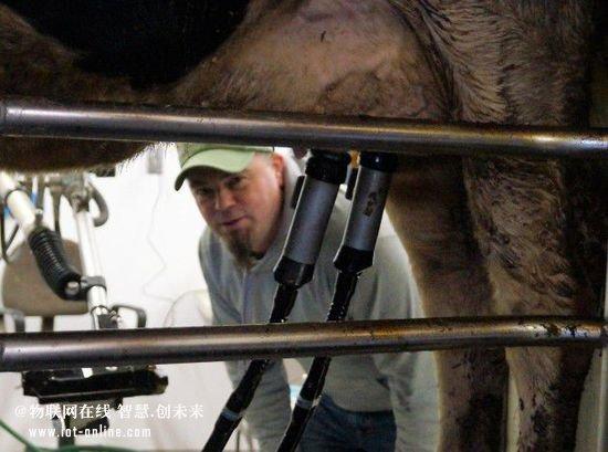 机器人也来帮忙挤奶了 以后当农民还得会高科技