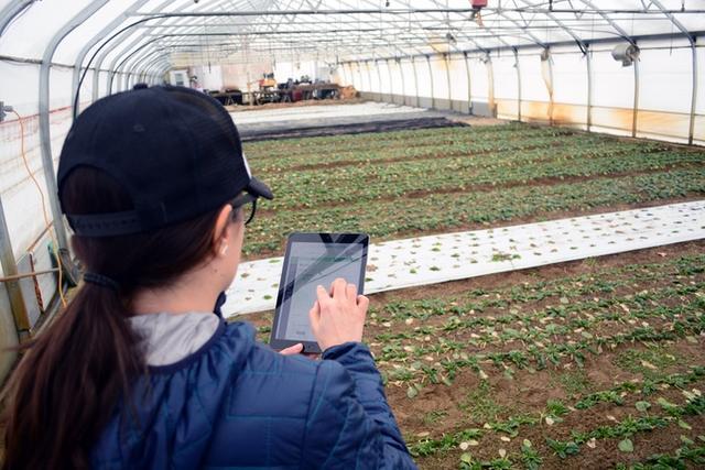 Motorleaf无线传感器:让小院植物更健康生长