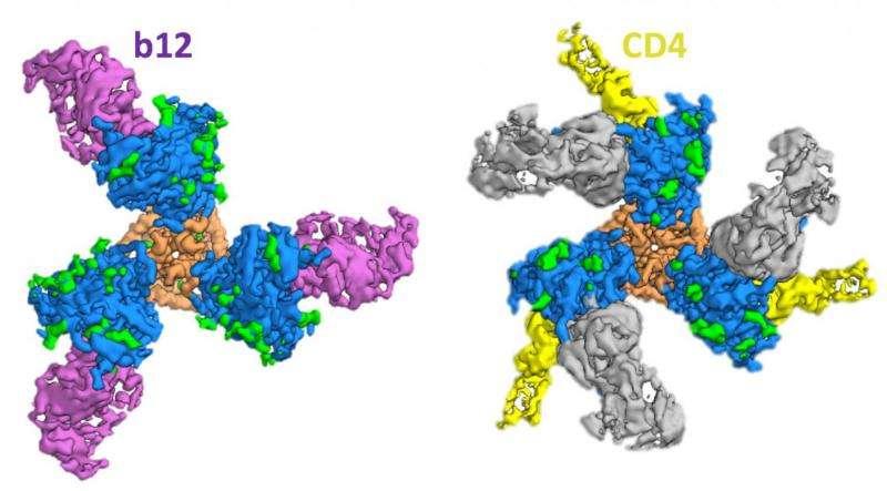 """科学家发现艾滋病疫苗""""漏洞"""":有望成为全新突破口"""