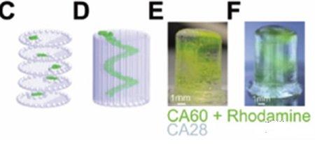 QUT的可调整生物3D打印墨水展示了药物研发的未来