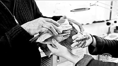 """""""史前古鱼""""薄如纸30年无人敢动 学者用3D打印揭秘"""