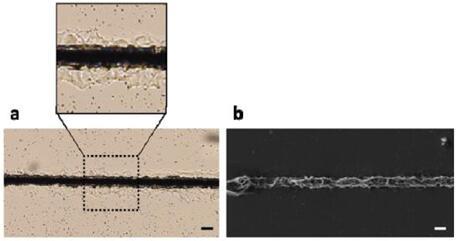 金属-硅混合微结构实现创新型柔性光电器件