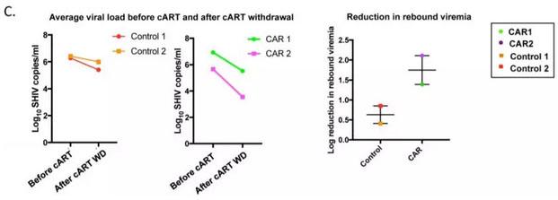 CAR-T疗法可治愈艾滋病?