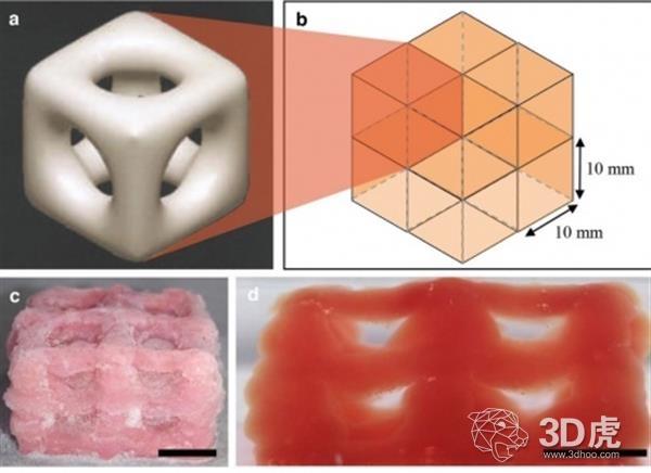 研究员开发出3D打印超柔软生物结构的低温3D打印技术