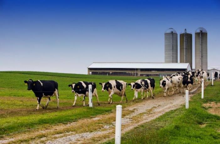 IEEE专家:从农场到餐桌,物联网技术为食品供应保驾护航